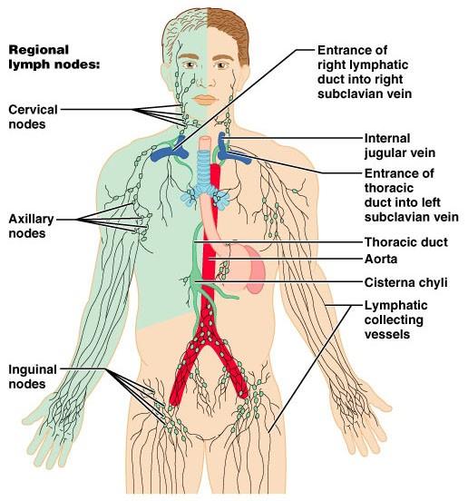 drainage lymphatique corps